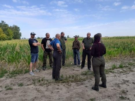 Grodzenie upraw kukurydzy